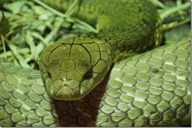 snake-226283_1280