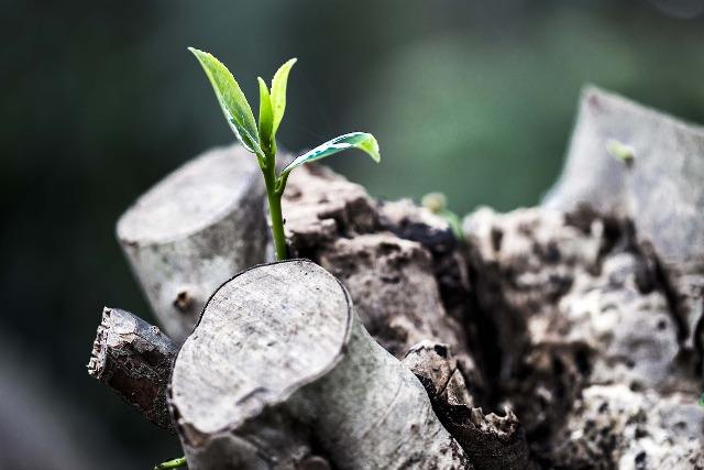 grow-781769_1280