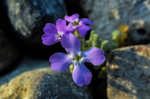 wildflower-2093500_1280